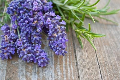 Rosemary-lavender-bliss-shutterstock_115802536.jpg